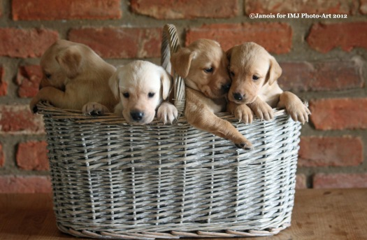 Exhibition Picture 7 - Basket of Fun
